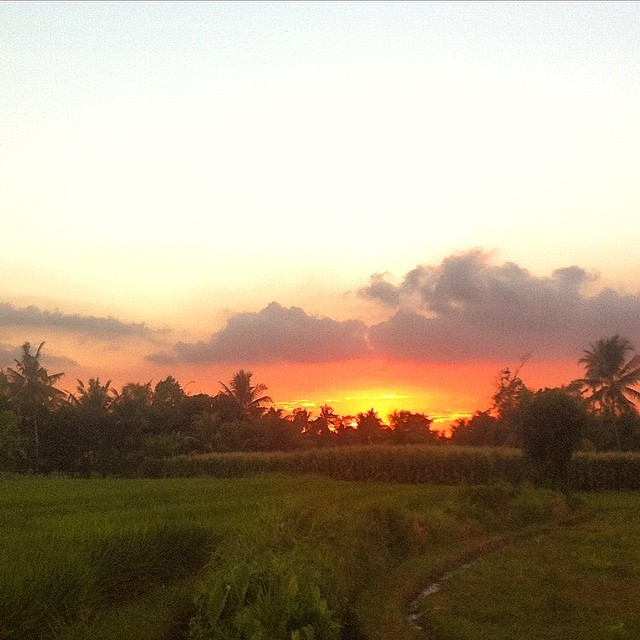 Sunset Sundaze - tropic farm sunset vibes in between Ubud and Canggu #thisisBali #sunsetsundaze #soleswithsoul