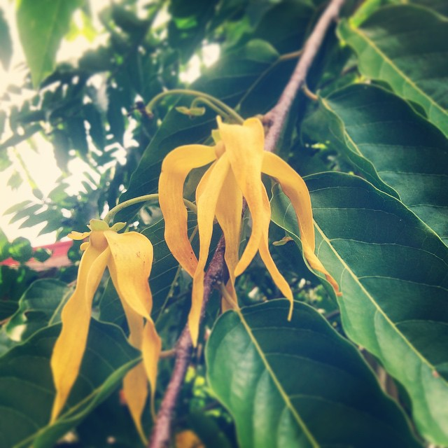 Can anyone guess what this sweet-smelling flower/tree is called? #MotherNatureMonday