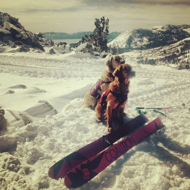 Ambassador @jennifer_violet had a serious sit down with @mtroseskitahoe #skipatroldogs; they approve! The #abyss skis are rad! #sisterhoodofshred #skiing