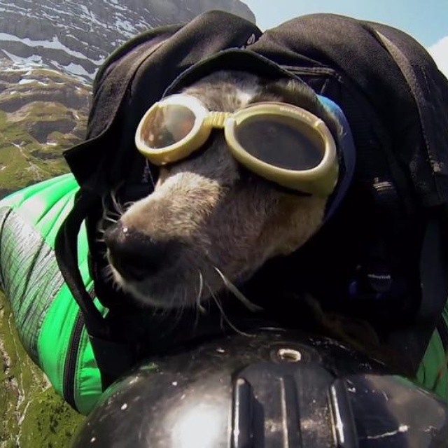 Weve been looking at adding adventure films to our movie nights in the summer and its hard not to be inspired. Check our blog at california89.com/blog to see snippets of our faves including a basejumping dog!