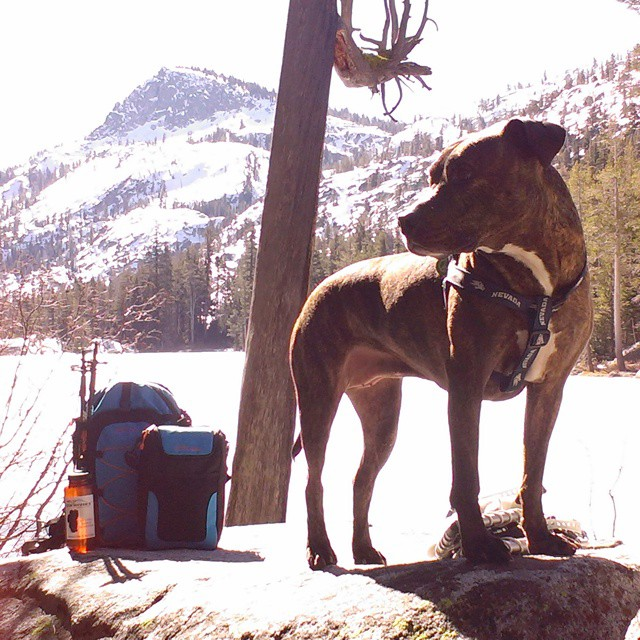 This isn't normal weather for #tahoe in February, but there is always some type of #adventure to be had! #summerhikesinwinter #desolation #hiking #thecascade #pitbulls #graniterocx