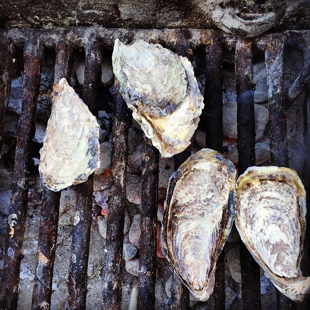 """O Oysters,"" said the Carpenter, ""You've had a pleasant run! Shall we be trotting home again?' But answer came there none-- And this was scarcely odd, because They'd eaten every one.  #TomalesBay #oysters #oystershucking #sundayfunday #lategram..."