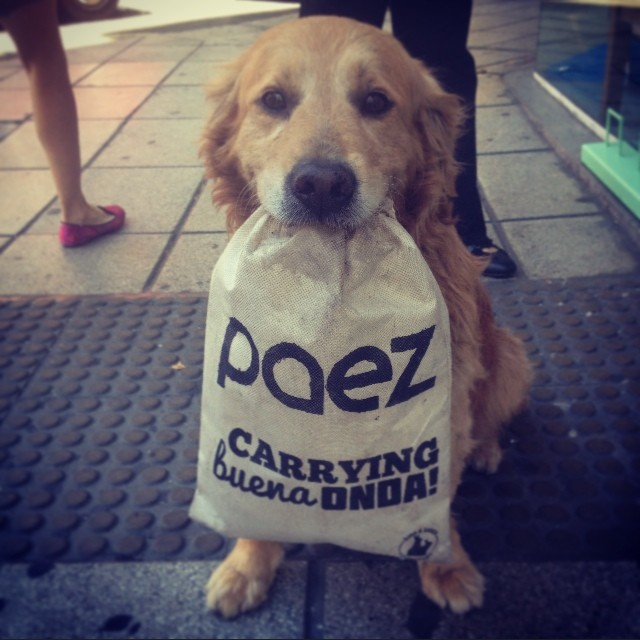 Dogs love #paezshoes! #christmas #dogs #buenaonda #deliveringbuenaonda #paez #summerinthecity #carryingbuenaonda