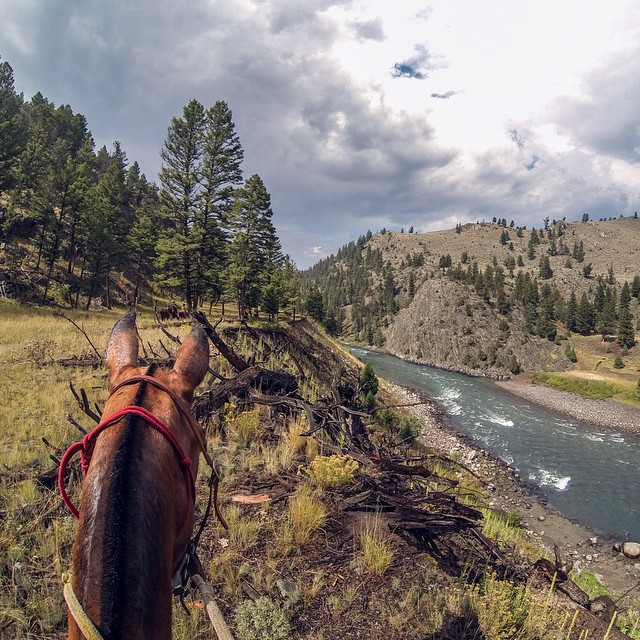 Photo of the Day! Riding mules in Yellowstone. Photo by Trevor Warren.  Have a photo you think is Photo of the Day worthy? Make sure to submit it for your chance at GoPro fame and maybe even a bit of fortune! http://spr.ly/photo-submit