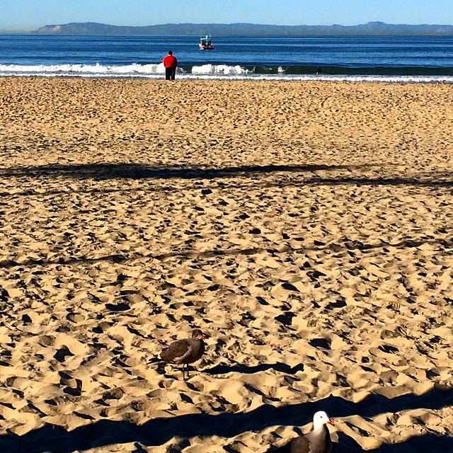 #uluLAGOON #beach #lastimagewasbunk #ispy #bird #coastal