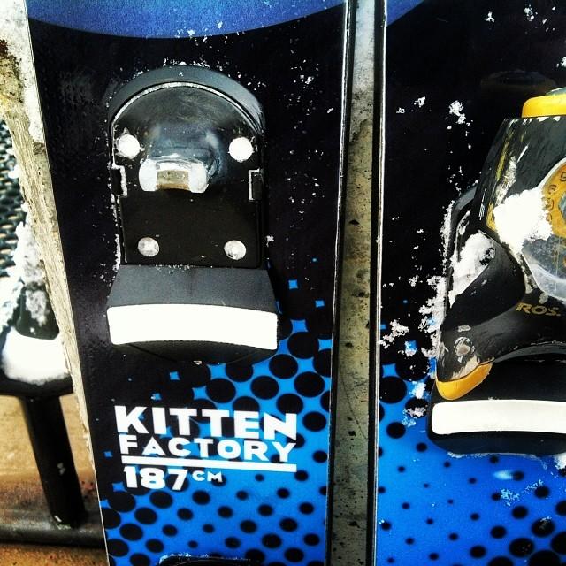 Oops #kittenfactory #binding_retention