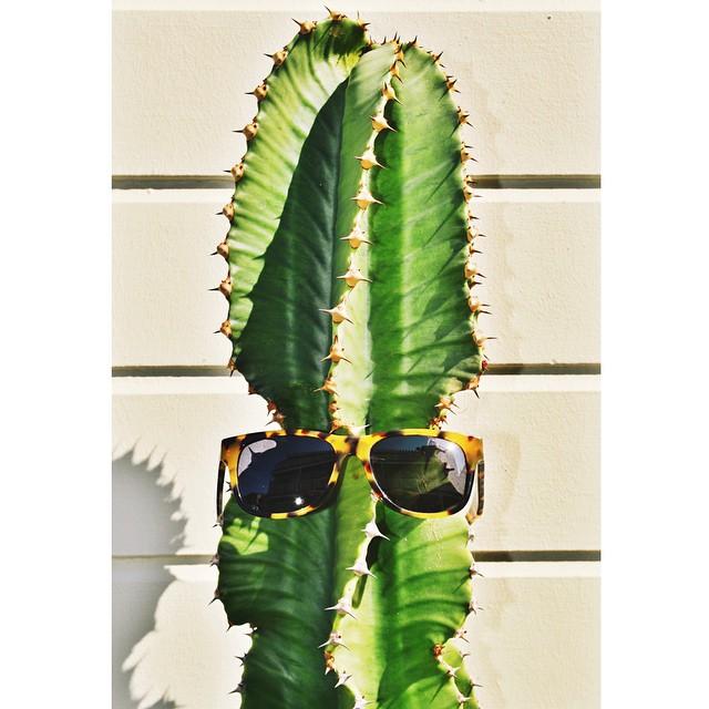 || CACTUS COOL || #bigrisky #hovenvision #cactus #beachlife #socal #wayfarer #polarized #tortoiseshell #tbt #instagood