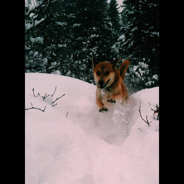 Love adventuring in the snow with this guy.