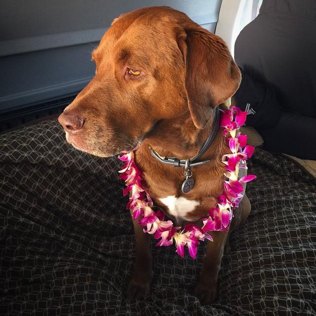 Aloha sweet #ObieOneKorgNobie | #FurFam | #ChoosePositivityNow.com