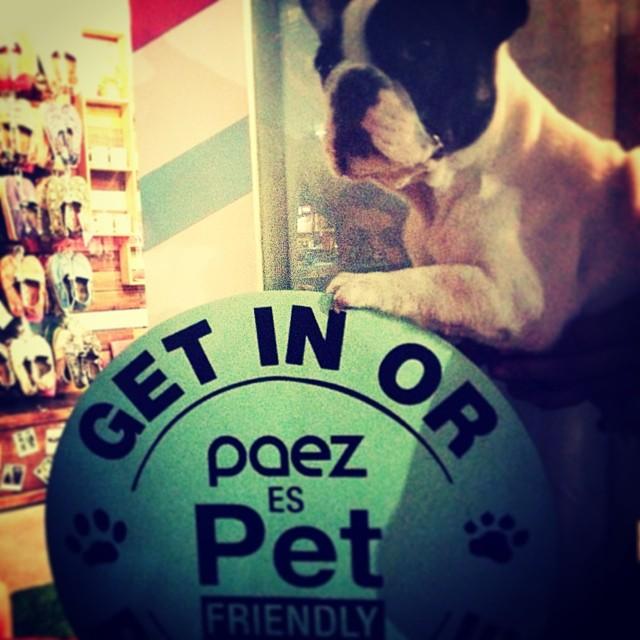 Get in you dog! Están todos invitados a participar de #trasnochados, incluso los caninos