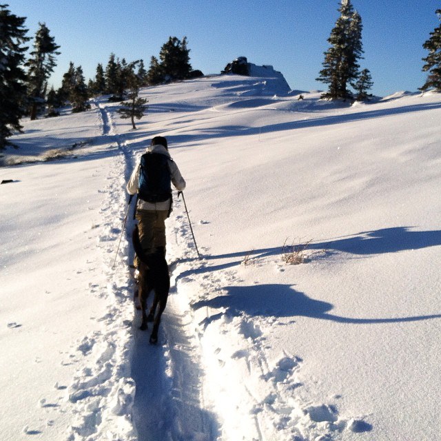 @rblums took #backcountry tip number one yesterday and  pushed the bush all the way to #twinpeaks. #sisterhoodofshred #pushthebush #tahoebackcountry #backcountryskiing