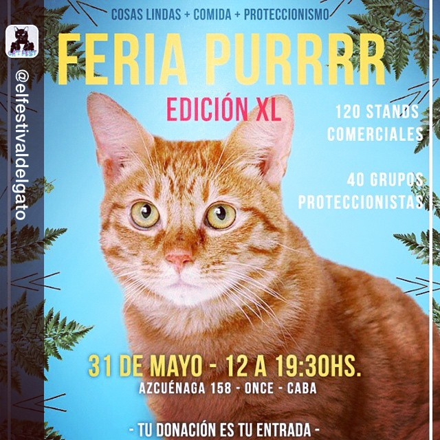 Repost from @elfestivaldelgato via @igrepost_app, it's free! Use the @igrepost_app to save, repost Instagram pics and videos, Ya llega la versión XL de la #FeriaPurrrr ! Domingo 31 de Mayo - Colegio San José (Azcuénaga 158) - de 12.30 a 19.30 horas....