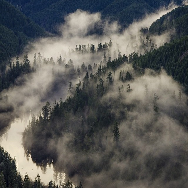 Into the fog by @nick_terrel #natureofproof