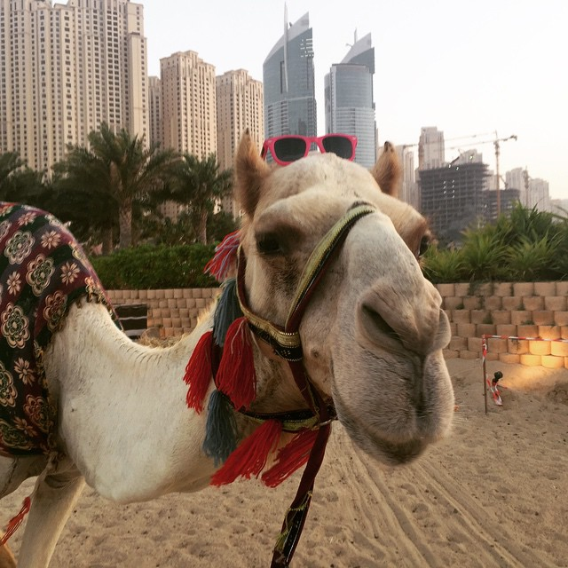 Happy #humpday from the newest #waveborn model #camel #geico #wcbu2015 #findthesun #pink