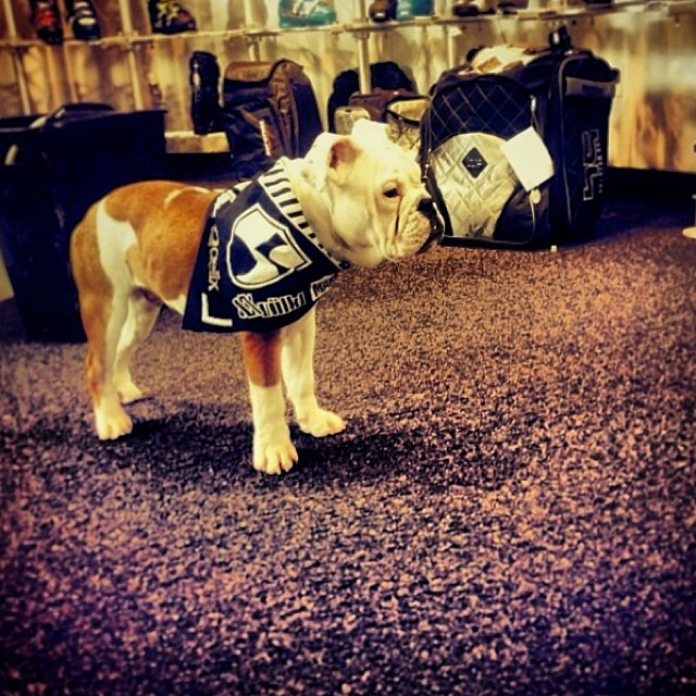 #regram from @Karlthebulldog | Hanging out at @squawvalley Surefoot and rocking the #highfivesfoundation brand