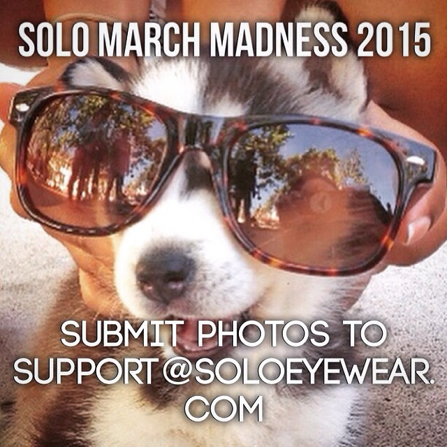 Join the Madness and enter your most creative photo of your pet in SOLOs in our annual March Madness bracket! Submit all entries to support@soloeyewear.com. Winner gets a free pair of sunglasses!! ‪#soloeyewear #marchmadness‬ ‬#animalsofinstagram...