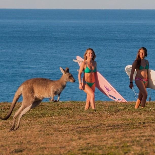 @alisonsadventures on her #bikiniadventure through #australia --- Vote for your favorite #bikini adventurer at http://www.thesurfchannel.com/slide/bikini-adventure-instagram-contest-finalists-vote-now/ --- the #photo with the most #votes wins a #2014...