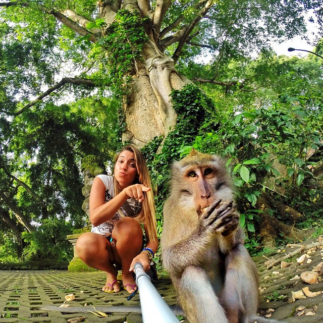 @vanessaap hanging out with a local on vacation in Ubud, Bali, Indonesia. #gopro #gopole #gopolereach #monkey #indonesia