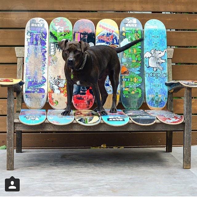 Max in the best seat in the house! @zoesk8z #bulthelmets #bultteam #bult #skateboard #mansbestfriend ⚡️⚡️⚡️ #ridethelightning