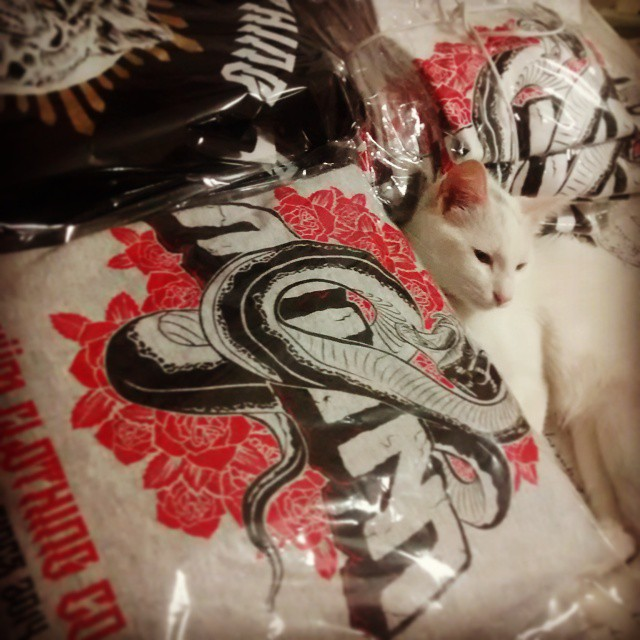 #cat #hoddies #ready  #miumtoys