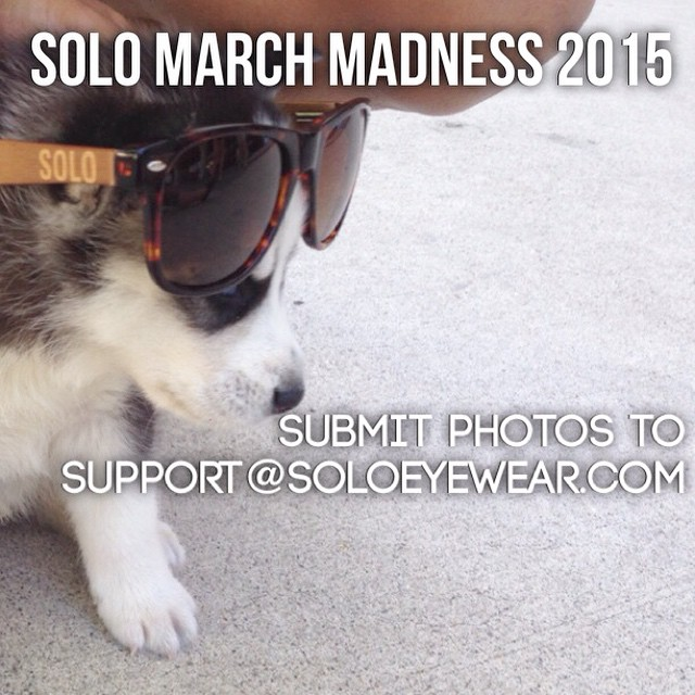 It's almost here! E-mail us your photos by Sunday, March 22nd to be entered in our Pets of SOLO March Madness bracket! #soloeyewear #marchmadness #bamboo #sunglasses #cute #happy #love #instadaily #style #swag #dogsofinstagram