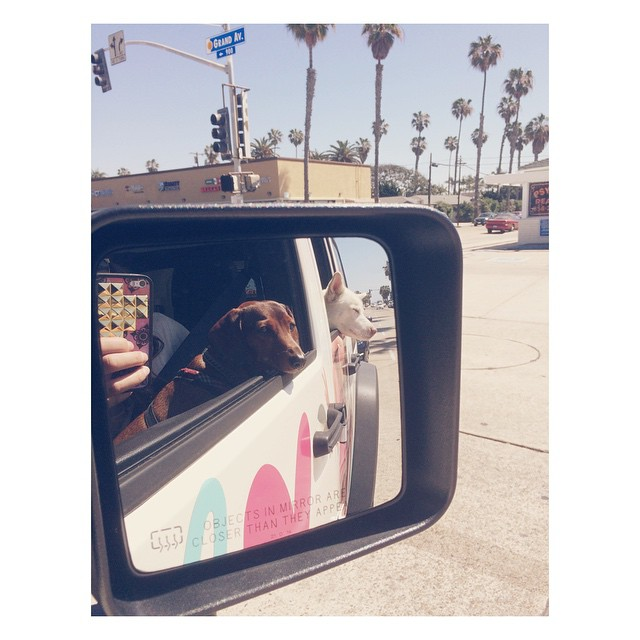 California Cruisin... #dogsofinstagram #instahusky #wienerdog #angustheweenie #wearthecalidream #wildflowercases #sandiego