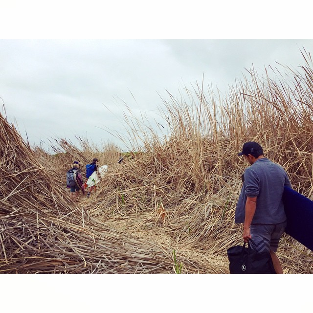 Trestles surf safari with Greg, Saadi and Chris/ path to lowers #awesome #awesomesurfboards #surfing #lowers #trestles #madeincalifornia