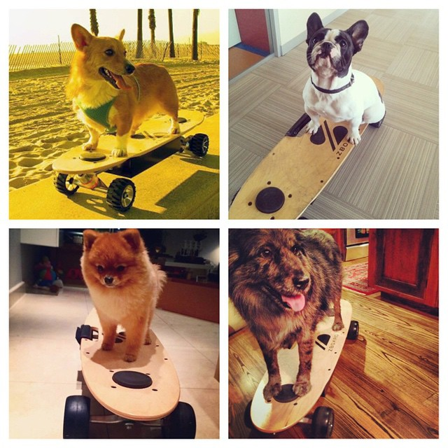 National Puppy Day! Take your pooch for a run and post it to instagram w hashtag #zboard