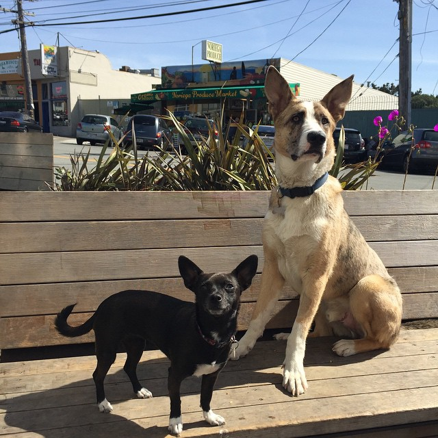 Penny and Jacob getting all the attention on National Puppy Day! #nationalpuppyday #zulilypets #soleswithsoul