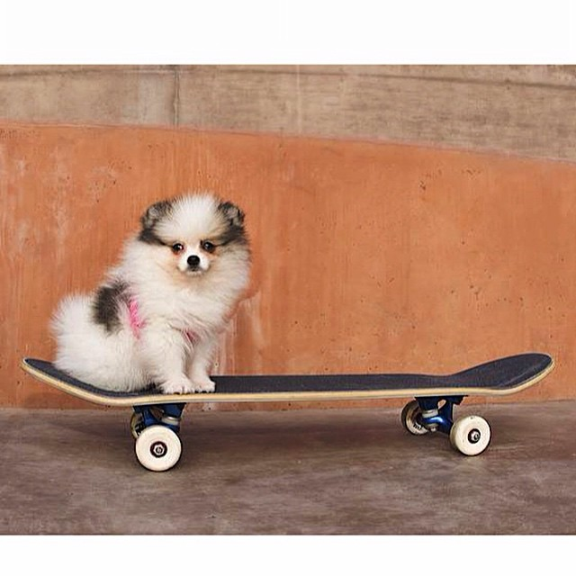Skater Pup loves to go for a ride too!