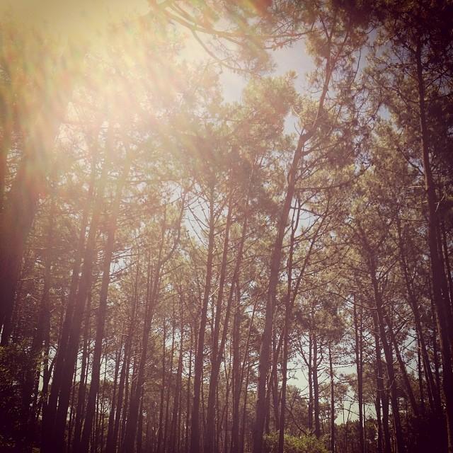 #goexplore The Woods! WWW.mafiabags.com