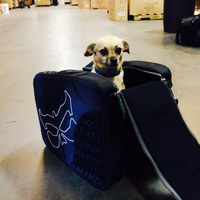 Puppies, now shipping from the warehouse.
