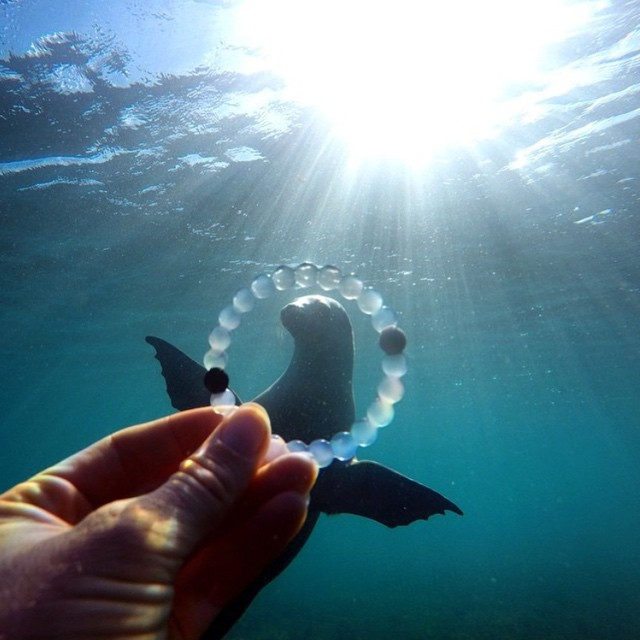Fins up! #livelokai Thanks @brinkleydavies