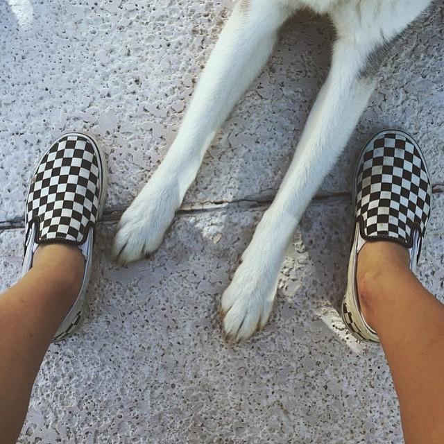 Mejores amigos #vansandanimals #slipon #dogs