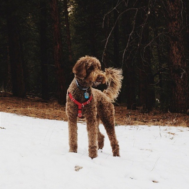 Meet Elk Meadow Park in Evergreen, CO by @nomad_visual: 'This off leash dog park has fields for dogs to roam and miles of trails to hike, cutting through pines and groves of aspens... It offers a place of sanctuary for the people of Denver. A place for...
