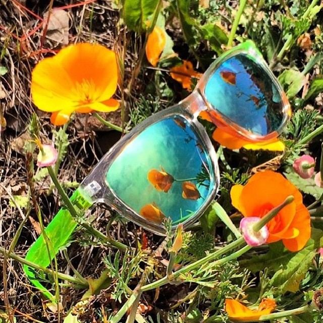 California poppies are taking over the Bay - hellooo spring! ☀️