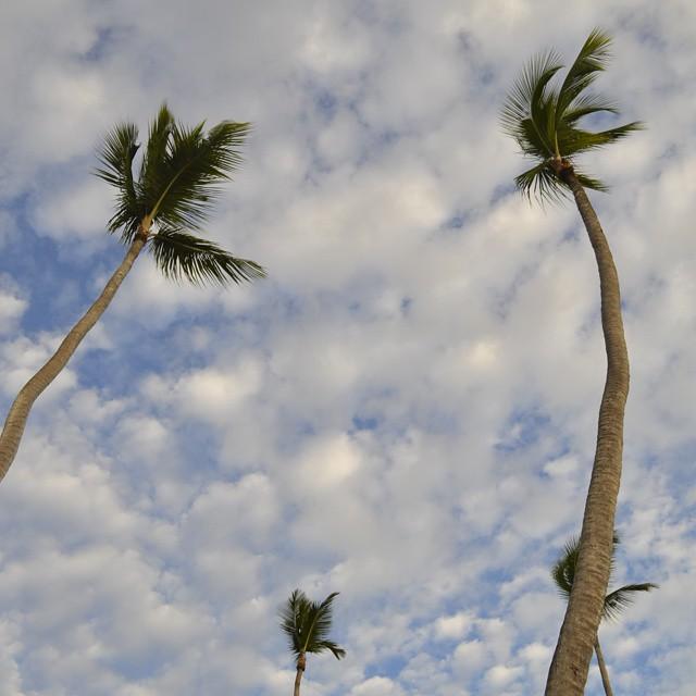 """Cuando mire para arriba y vi estas 4 palmeras... me hizo acordar a una vieja pelicula llamada: El mundo esta loco, loco. En donde un hombre escondia un tesoro debajo de 4 palmeras en forma de """"W."""" Ahora me arrepiento de no haber cavado algo.. aunque..."""