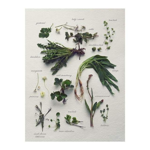 Todos nuestros diseños llevan nombres de plantas, árboles, flores y más del maravilloso mundo verde