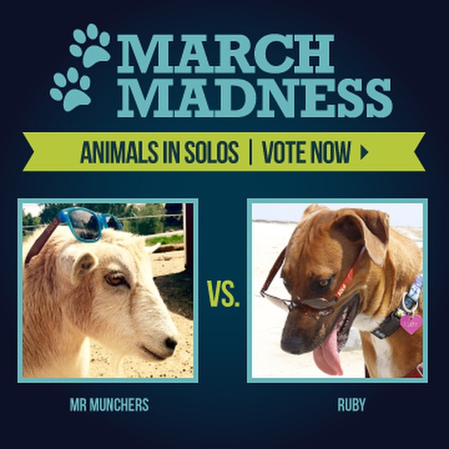 ROUND 3: Mr. Munchers or Ruby???? Vote now!