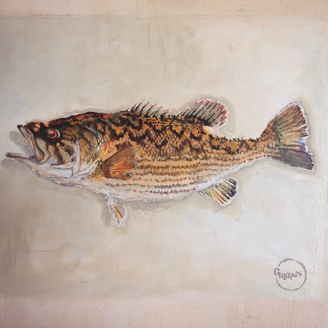 Just finished this #redeyebass art for #CoosaRiverkeeper. Really cool fish, rare and native to the Coosa watershed in Alabama. Give @coosariverkeepr a follow and support their efforts! #savetheskinnywater