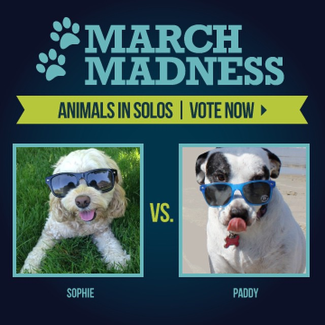 Sophie and Paddy need your votes!!!!