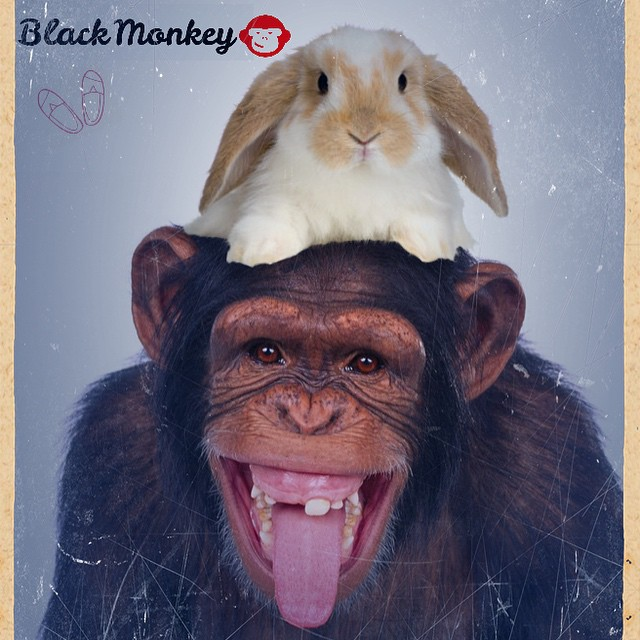 Muy Felices Pascuas les desea @blackmonkeystore! #alpargatas #happyeaster #domingo #peace #love #rabbit #argentinestyle #live #felicespascuas