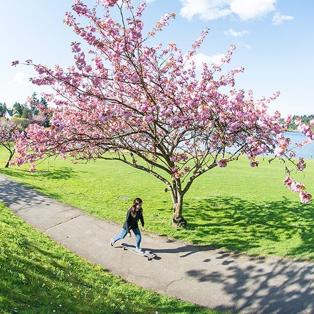 @alynefrost cruising around Seattle on the Dyad V2. #longboardgirls #seattle #seattlelife #seattlewa #pnw #sewardpark #longboard #longboarding #longboarder #dblongboards #goskate #shred #rad #stoked #skateboard #skateboarding #radicalbeauties...