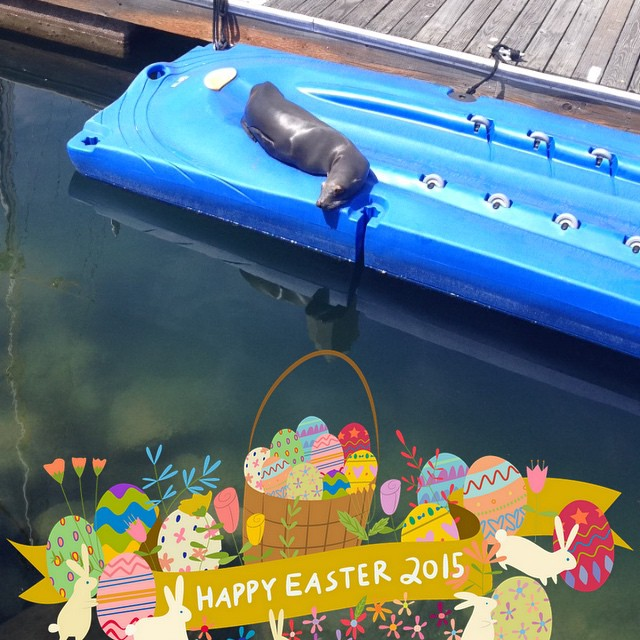 #happy #easter #sunday! Talk about #relaxation! Follow us on snap chat too @odinasurf !!