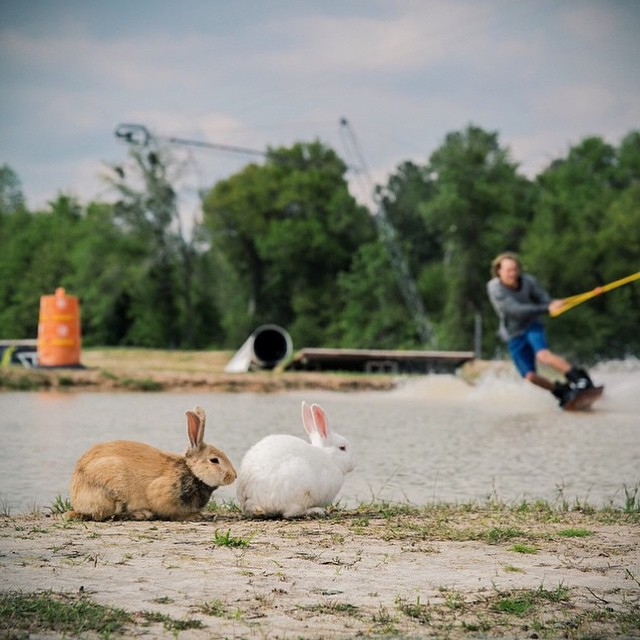 Happy Easter! Go enjoy some wakeboarding and bunnies at @valdostawakecompound | #gooutside #stayoutside #happyshredding #easter #wakeboard #cablepark photo: @hot_dang