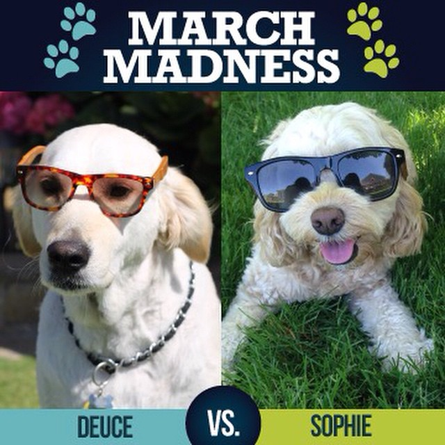 CHAMPIONSHIP ROUND: Vote in the comments below for Deuce or Sophie to be crowned our Animals in SOLOs March Madness 2015 Champion!!