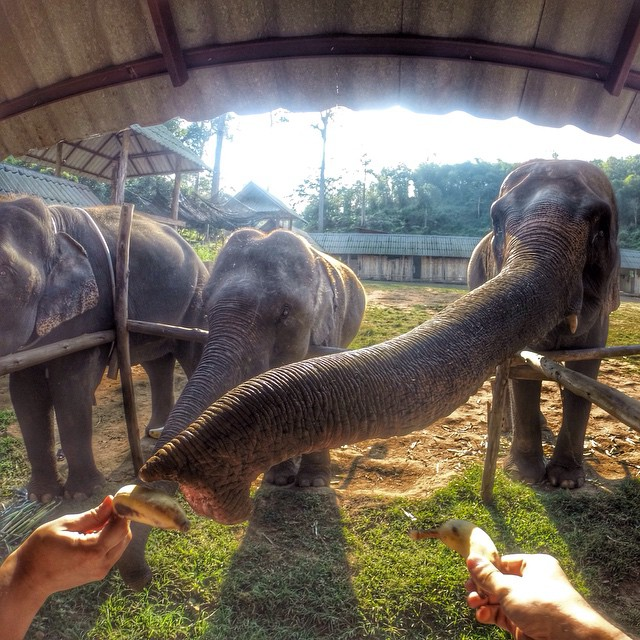 Even this guy knows breakfast is the most important meal of the day. Photo by @Pedro.Leo. #gopro #elephants #breakfast  It's GoPro Animal Month! Have a rad animal photo? Click the link in our profile to submit your best content to us!