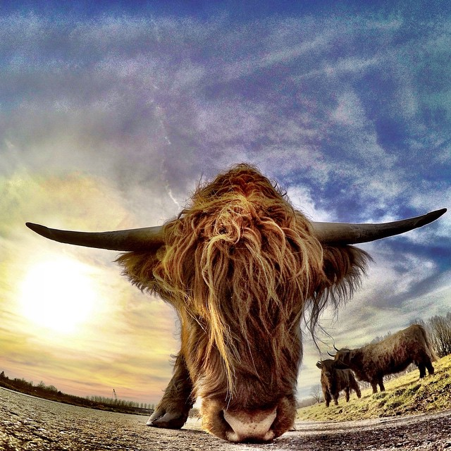 Photo of the Day! Yak Attack. Photo by @goproheroshooter. #gopro #yak #outdoors  Have a rad photo? Click the link in our profile to submit.