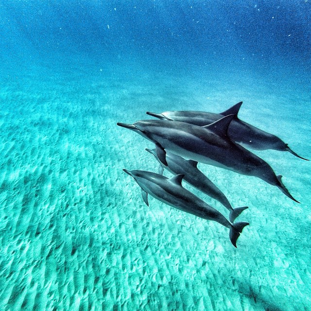 "Photo of the Day! Ross Seeman says, ""Following the call of the dolphins."" #GoPro #Dolphins"