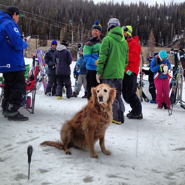 #bestdogever getting ready to tech some bindings at the #indieskitest last week with @skiingmagazine at @lovelandskiarea